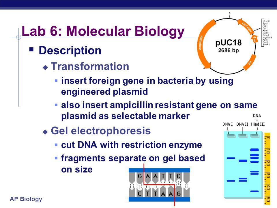 Lab 6: Molecular Biology