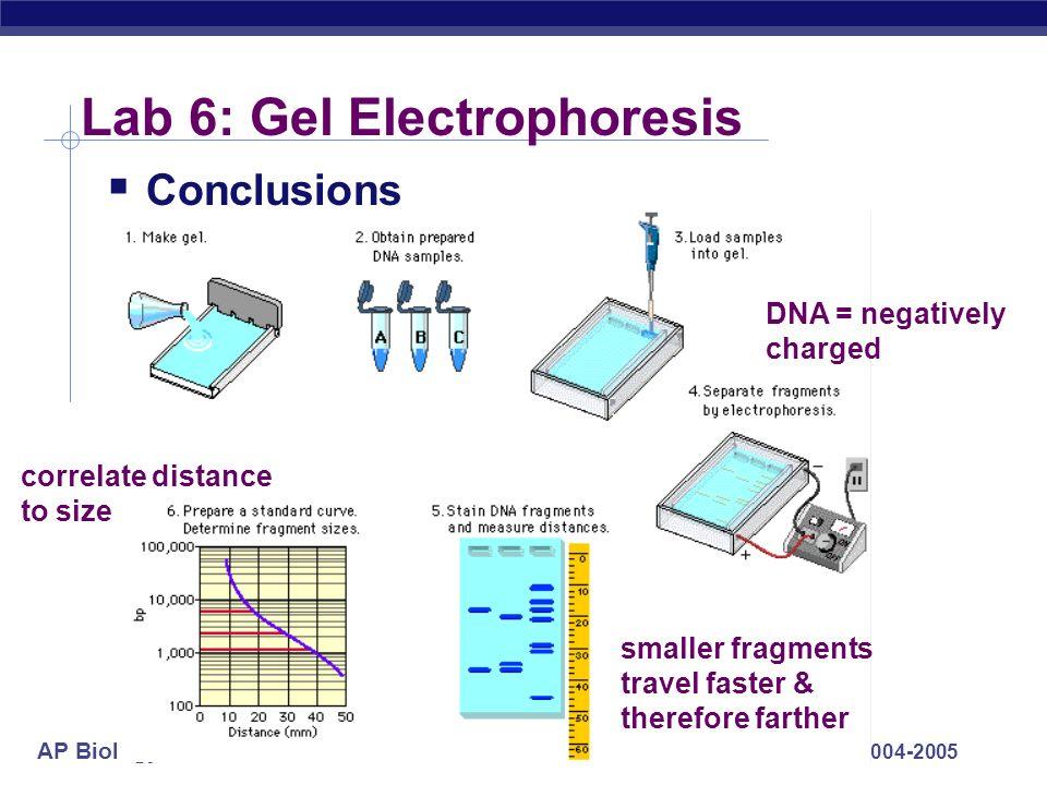 Lab 6: Gel Electrophoresis