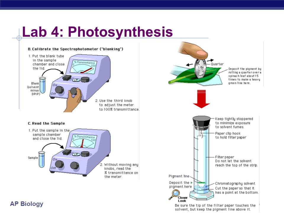 Lab 4: Photosynthesis 2004-2005