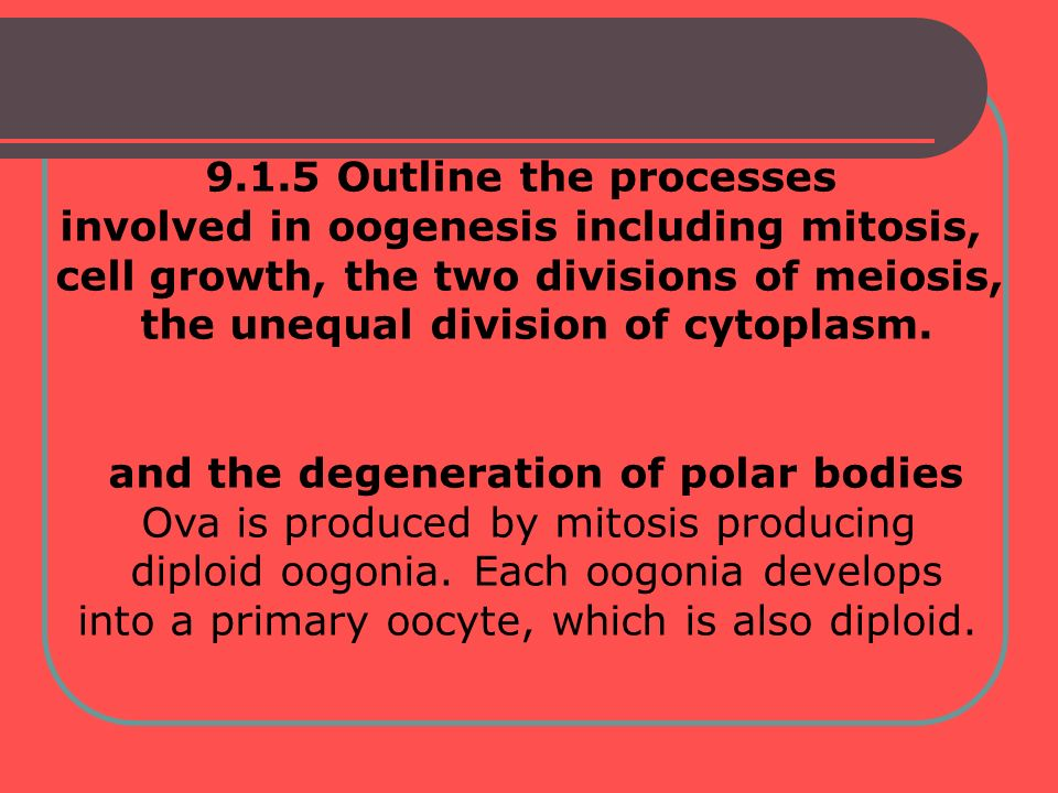 involved in oogenesis including mitosis,