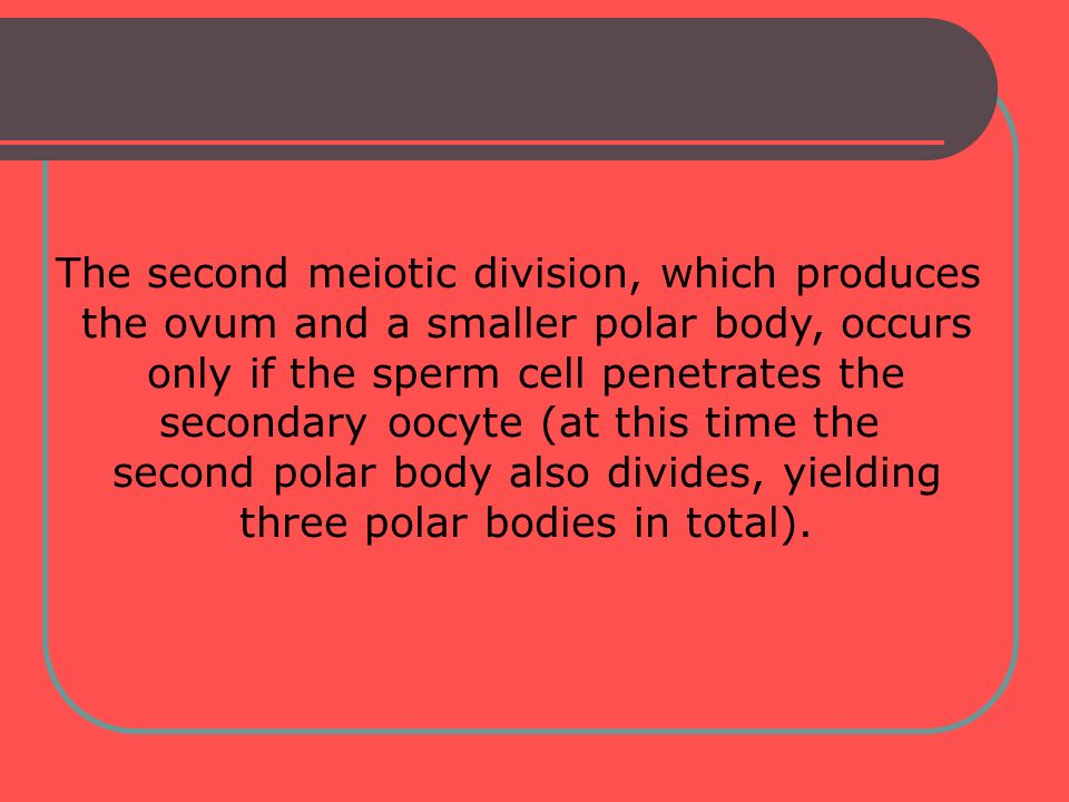 The second meiotic division, which produces