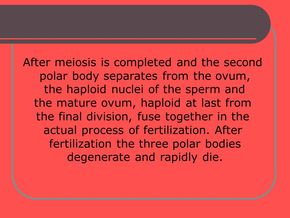 After meiosis is completed and the second