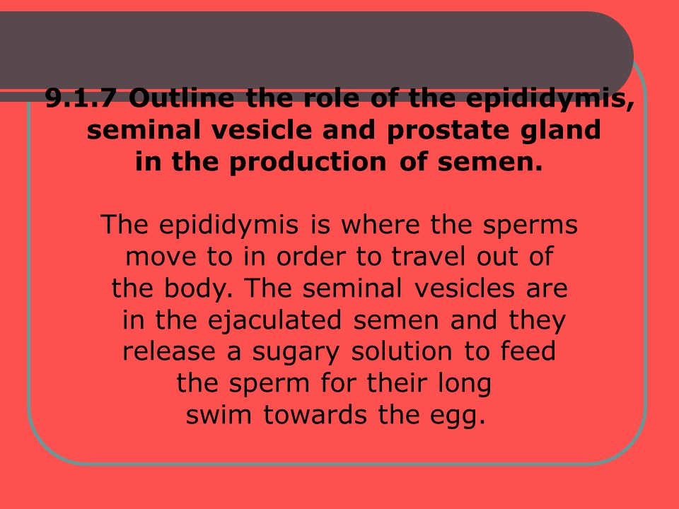 9.1.7 Outline the role of the epididymis,