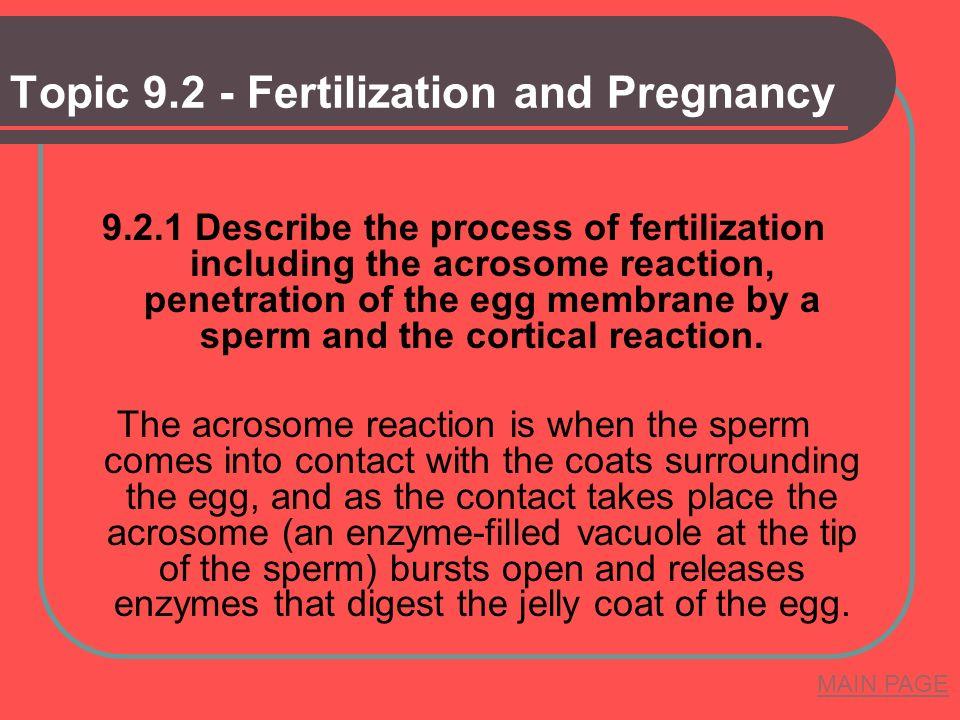 Topic 9.2 - Fertilization and Pregnancy