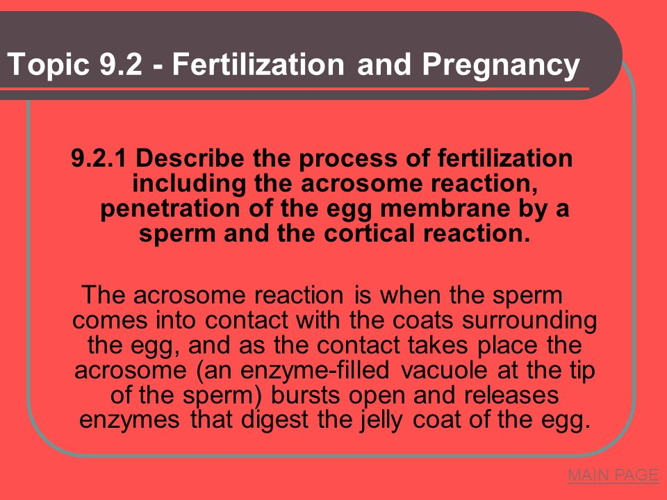Topic Fertilization and Pregnancy