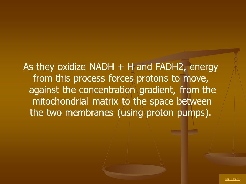 As they oxidize NADH + H and FADH2, energy