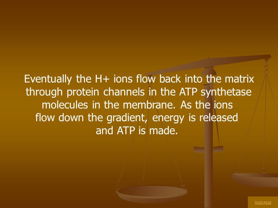 Eventually the H+ ions flow back into the matrix