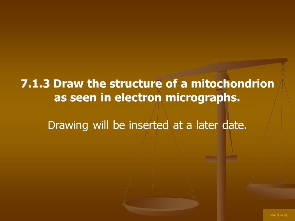 7.1.3 Draw the structure of a mitochondrion