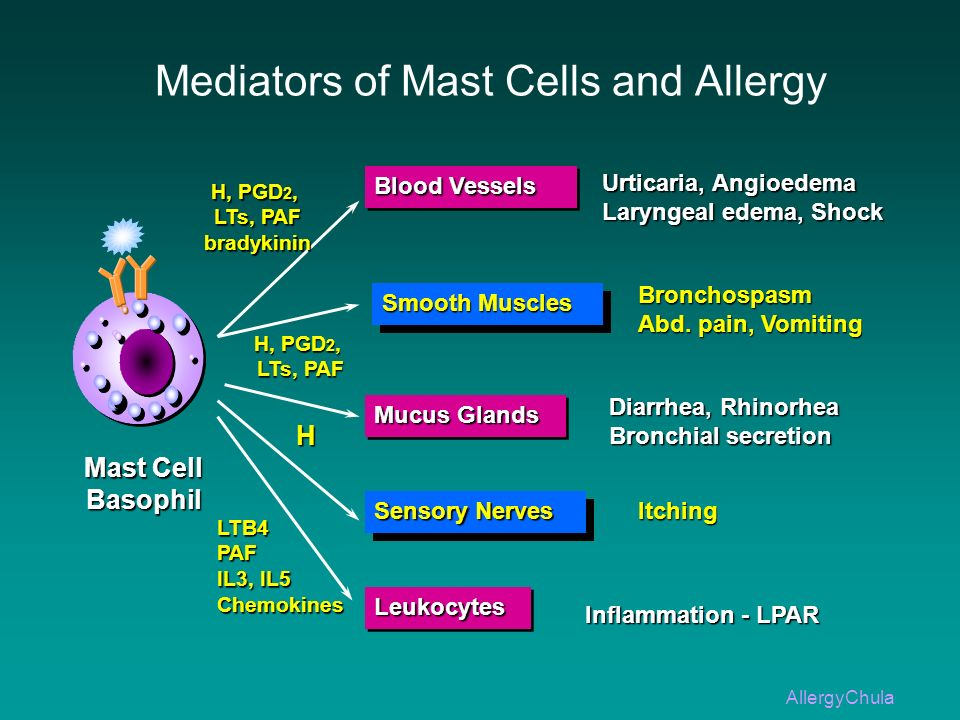 Mediators of Mast Cells and Allergy