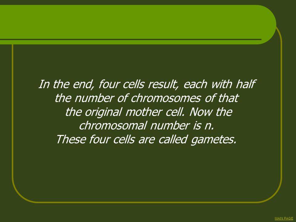 In the end, four cells result, each with half