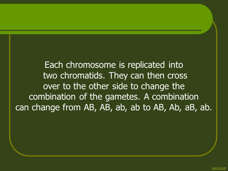 Each chromosome is replicated into two chromatids. They can then cross