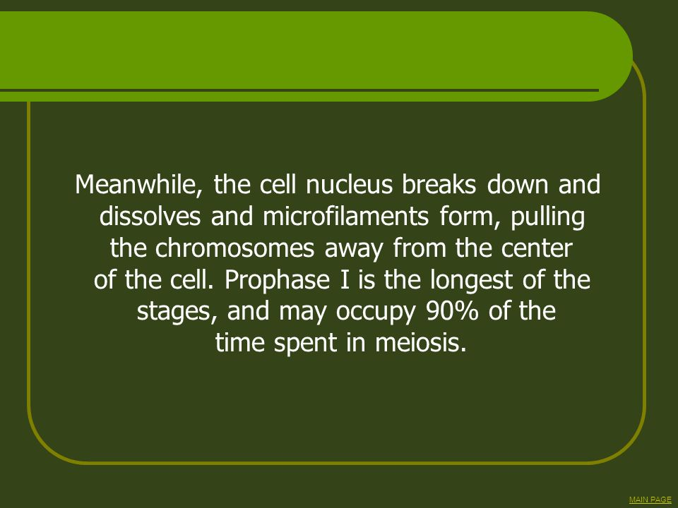 Meanwhile, the cell nucleus breaks down and