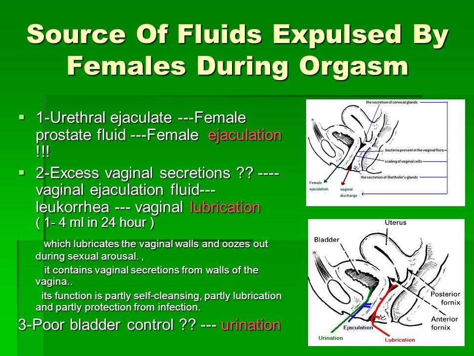 Source Of Fluids Expulsed By Females During Orgasm