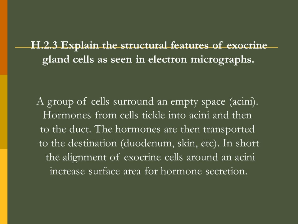 H.2.3 Explain the structural features of exocrine