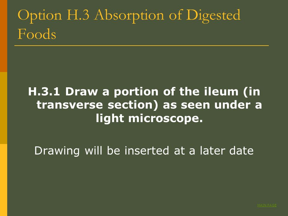 Option H.3 Absorption of Digested Foods