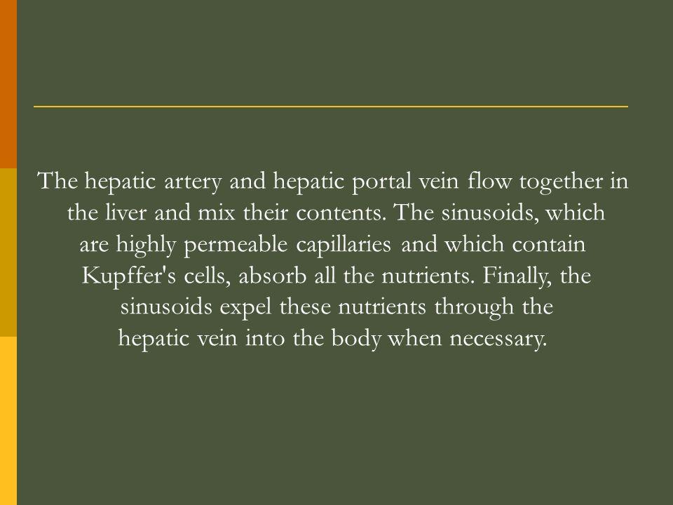 The hepatic artery and hepatic portal vein flow together in