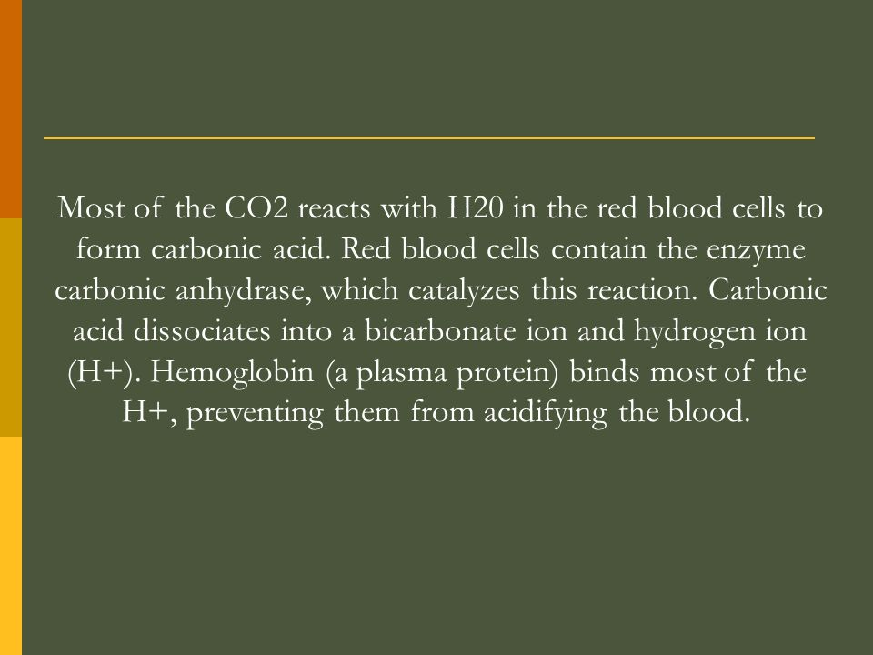 Most of the CO2 reacts with H20 in the red blood cells to
