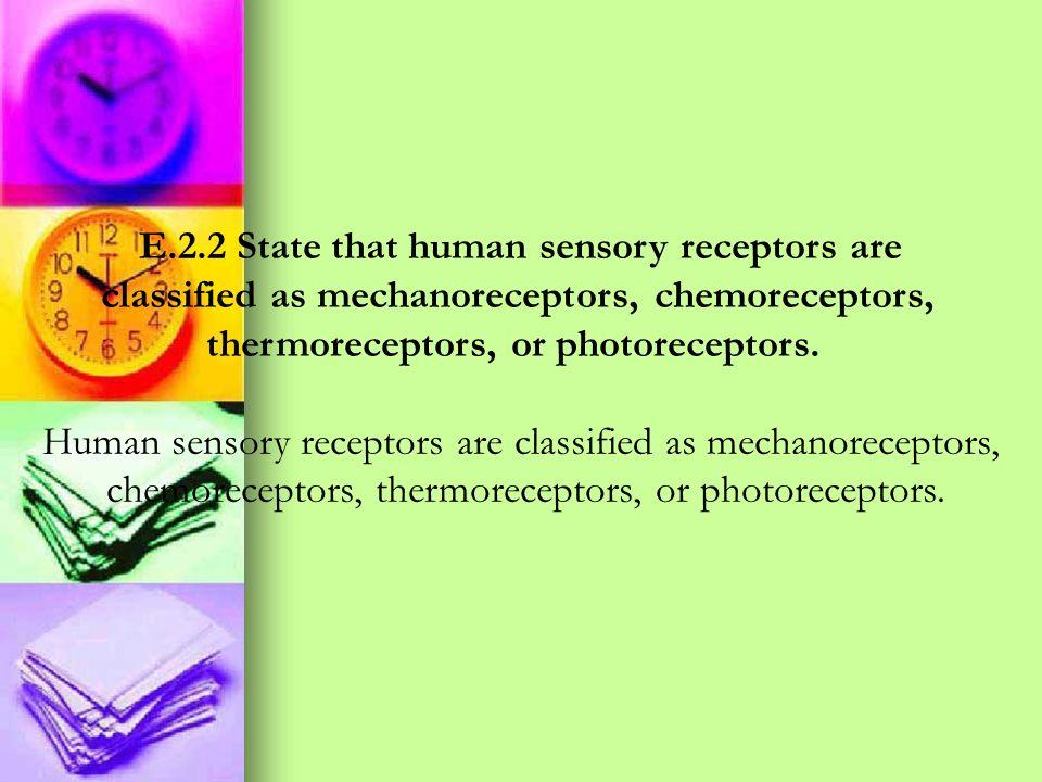 E.2.2 State that human sensory receptors are