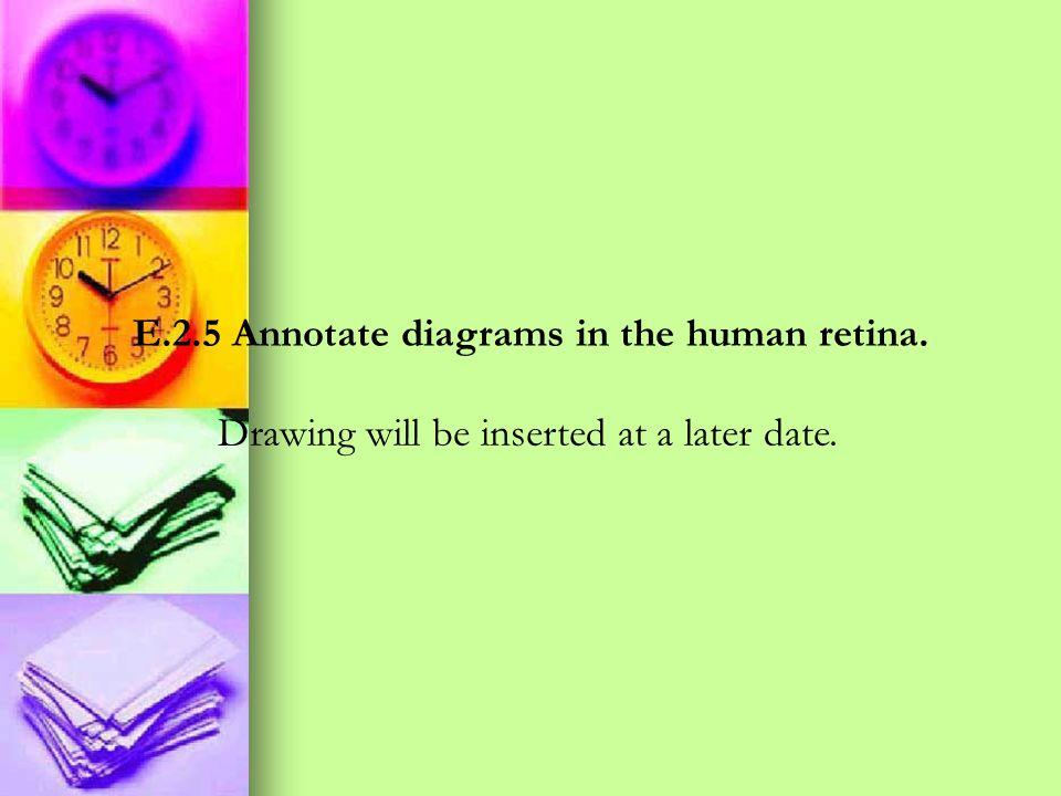 E.2.5 Annotate diagrams in the human retina.