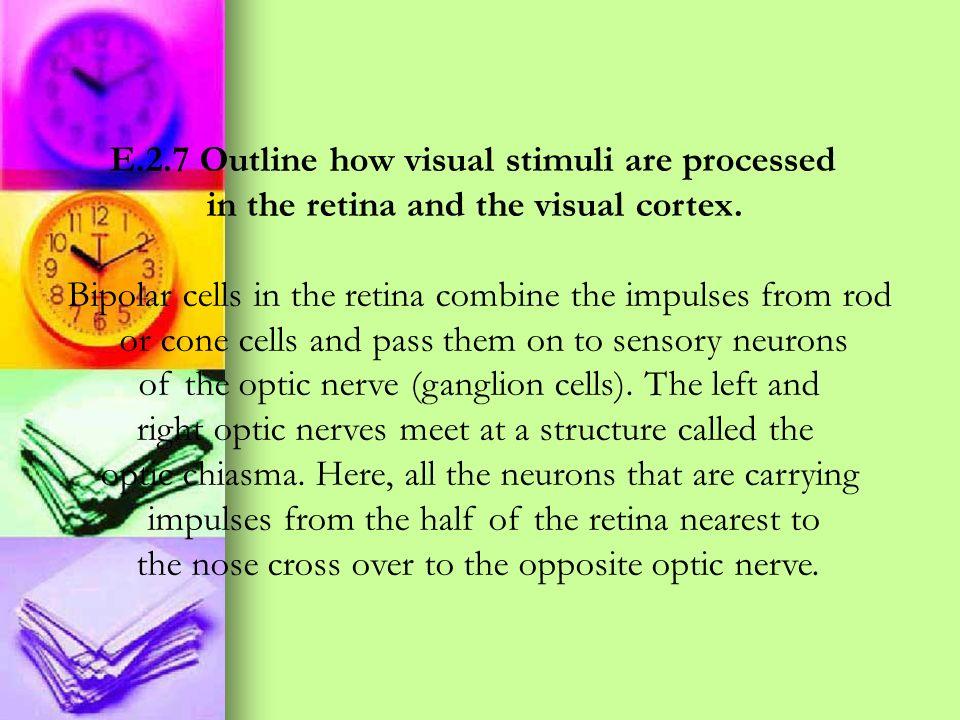 E.2.7 Outline how visual stimuli are processed