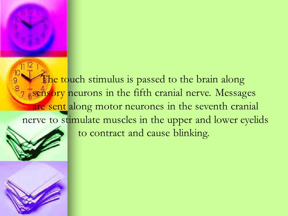 The touch stimulus is passed to the brain along