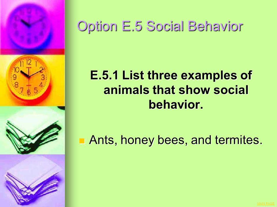 Option E.5 Social Behavior
