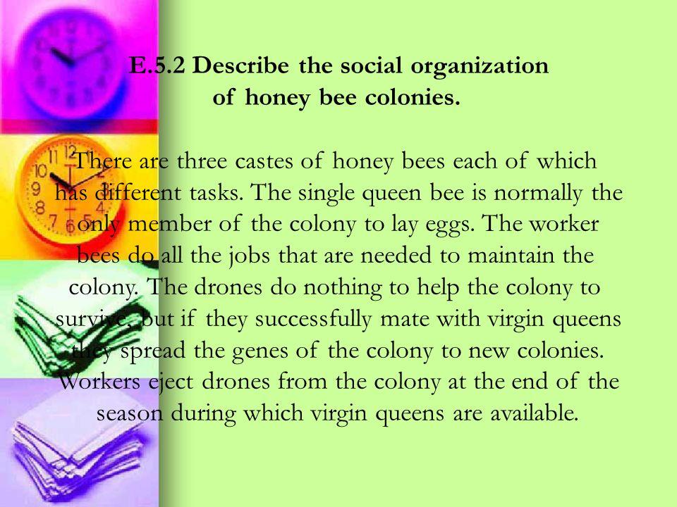 E.5.2 Describe the social organization