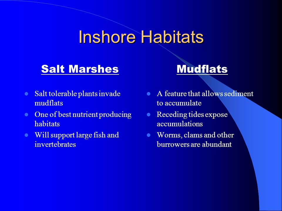 Inshore Habitats Salt Marshes Mudflats