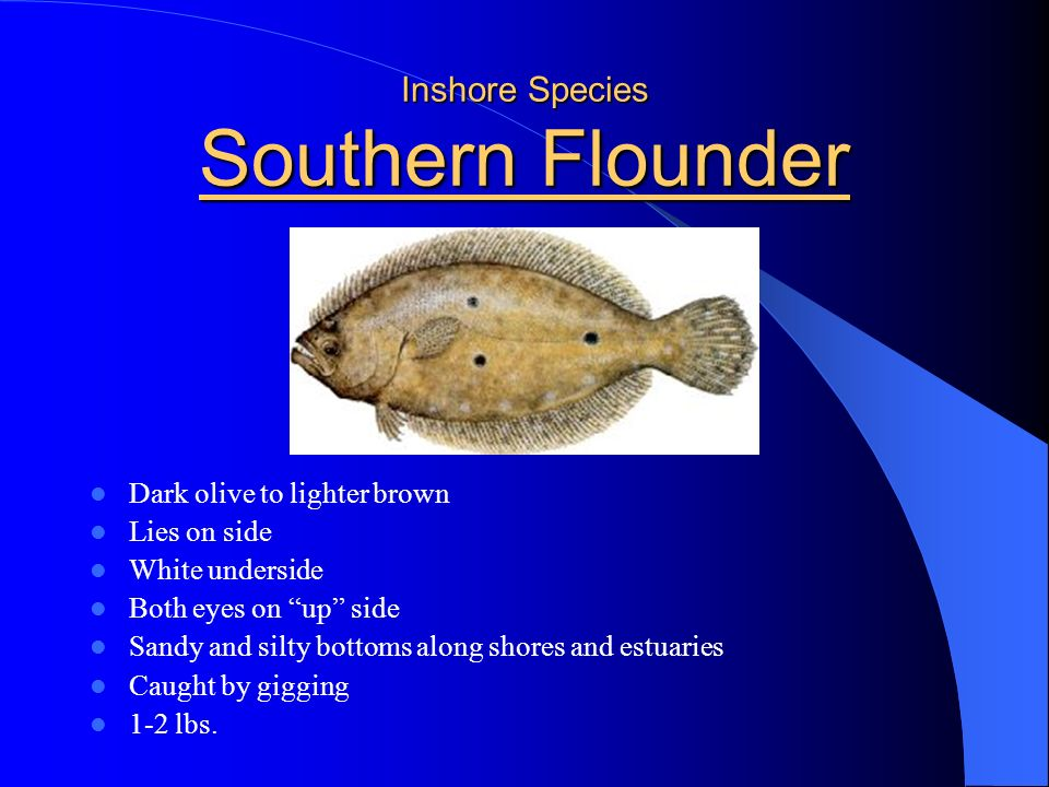 Inshore Species Southern Flounder