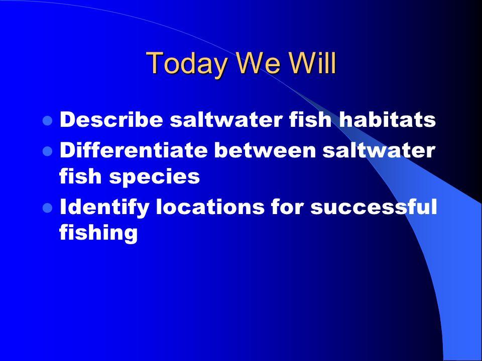 Today We Will Describe saltwater fish habitats
