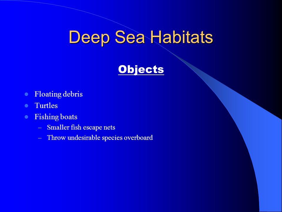 Deep Sea Habitats Objects Floating debris Turtles Fishing boats