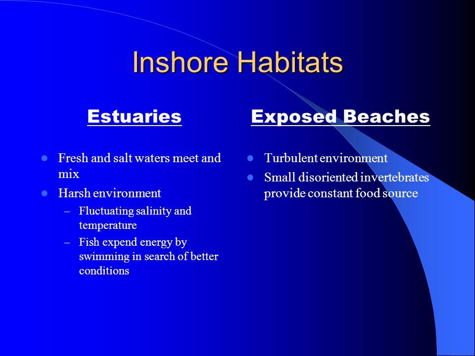 Inshore Habitats Estuaries Exposed Beaches