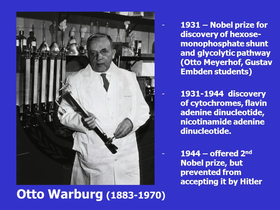 1931 – Nobel prize for discovery of hexose-monophosphate shunt and glycolytic pathway (Otto Meyerhof, Gustav Embden students)