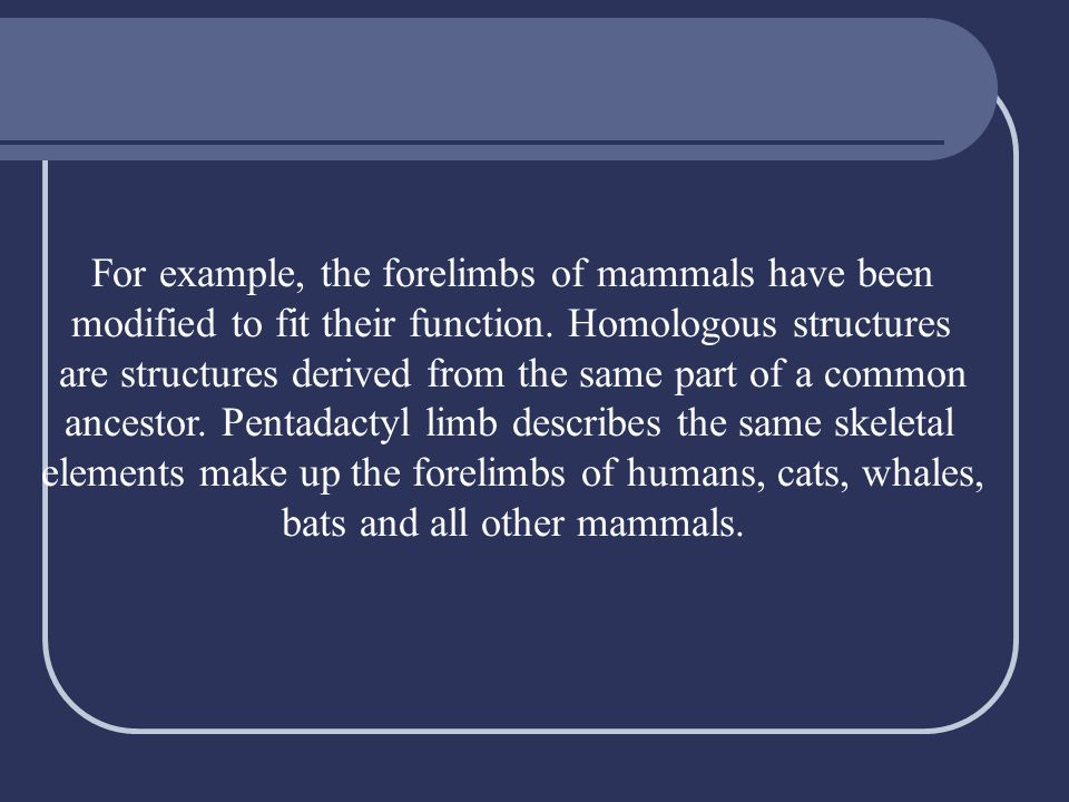 For example, the forelimbs of mammals have been