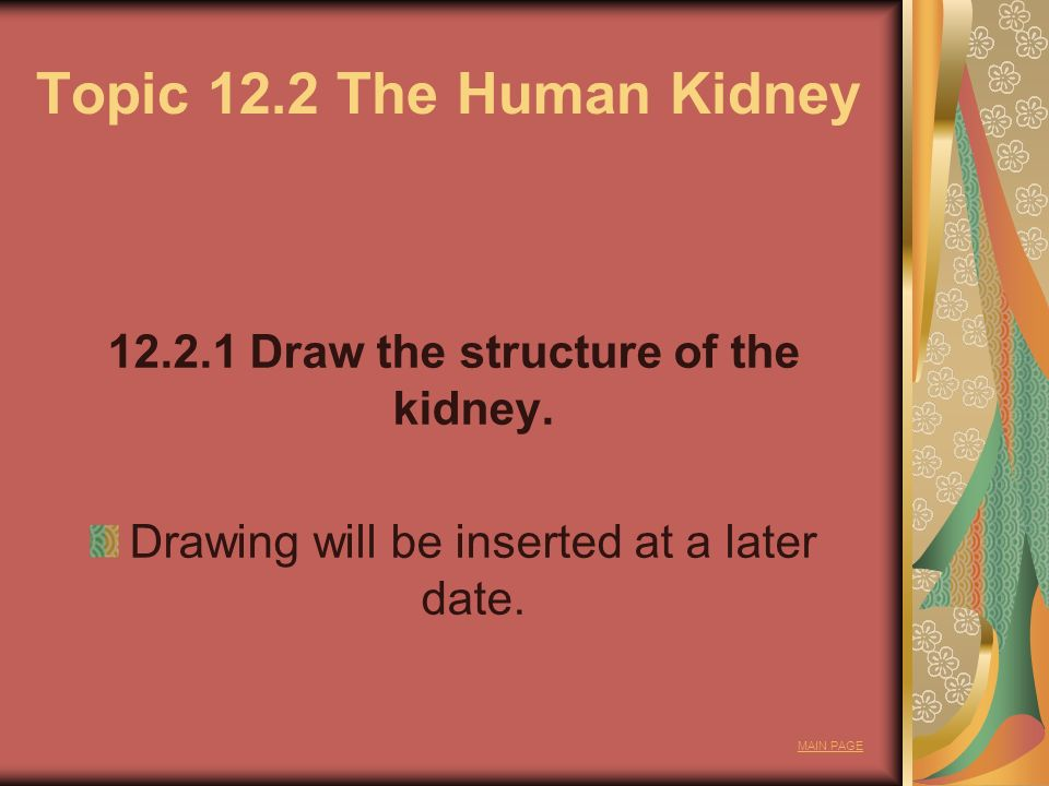 Topic 12.2 The Human Kidney Draw the structure of the kidney.