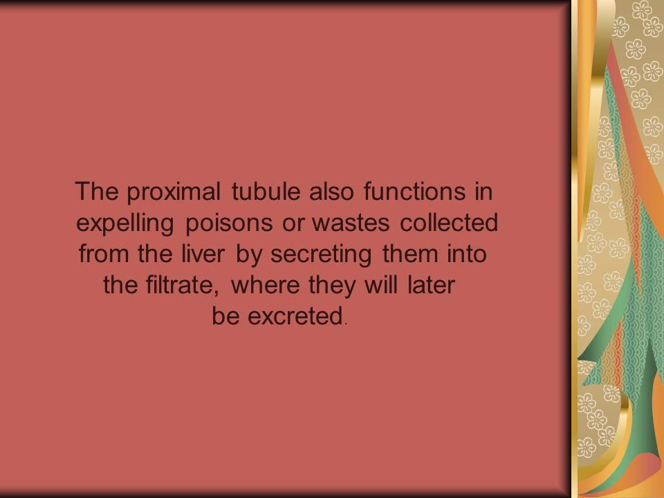 The proximal tubule also functions in