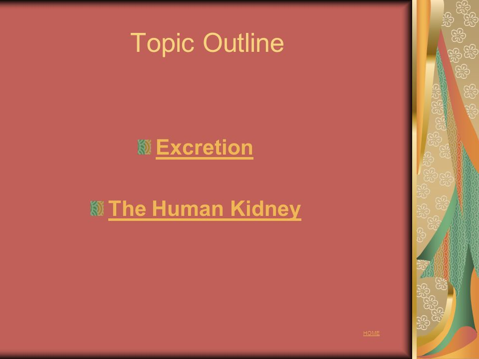 Topic Outline Excretion The Human Kidney HOME