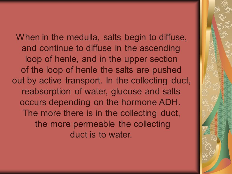 When in the medulla, salts begin to diffuse,