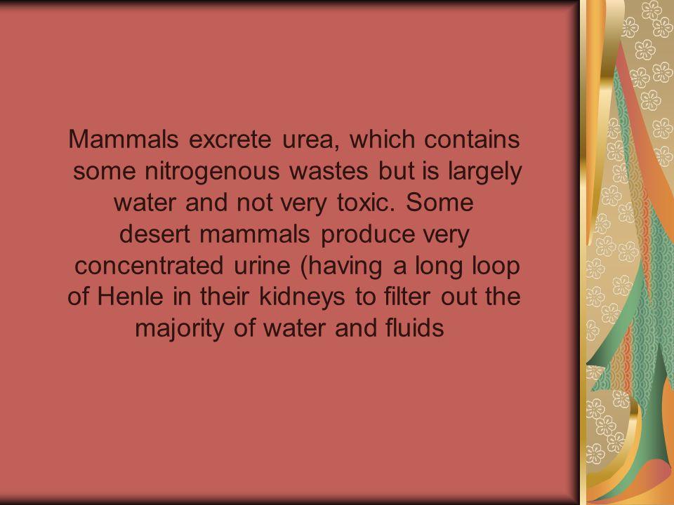 Mammals excrete urea, which contains