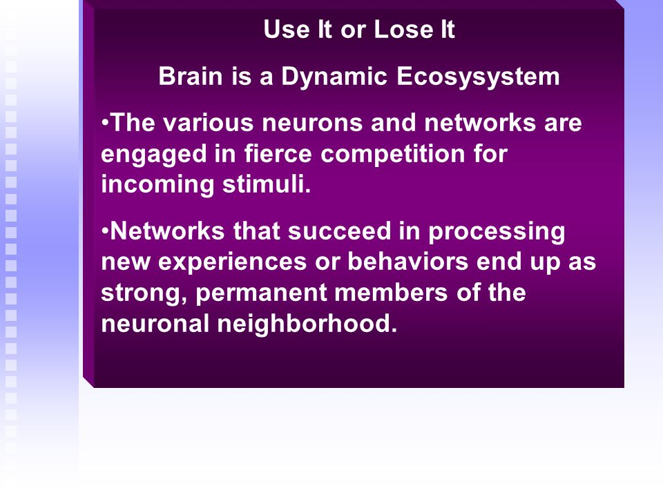 Brain is a Dynamic Ecosysystem