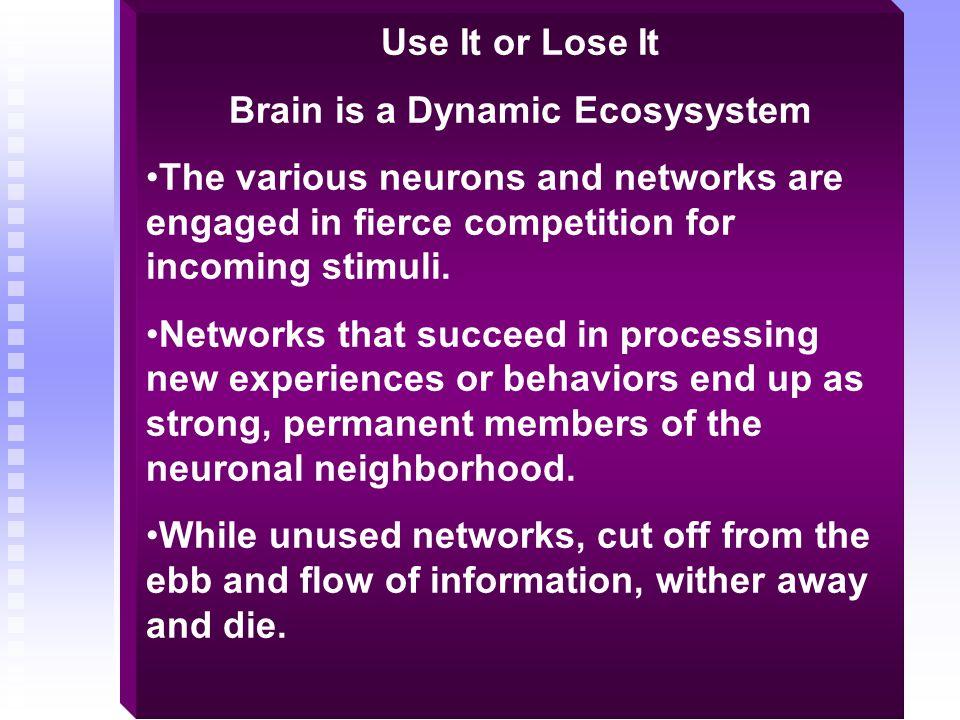 Brain is a Dynamic Ecosysystem