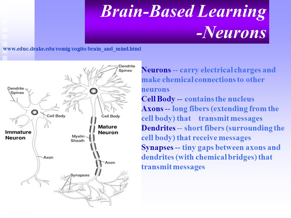 Brain-Based Learning -Neurons
