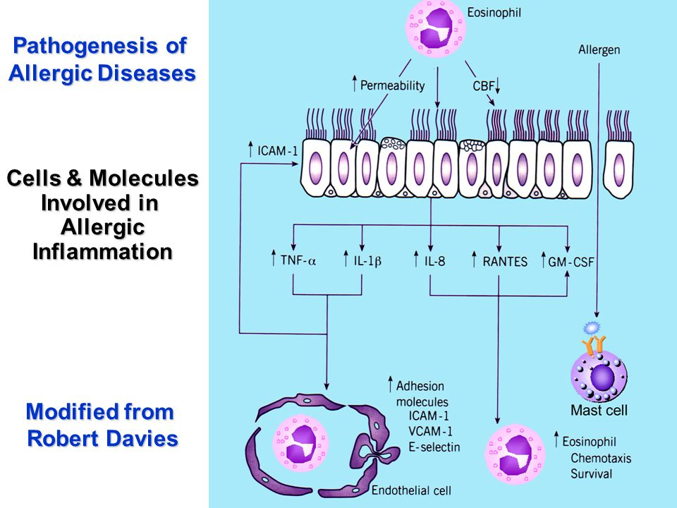 Pathogenesis of Allergic Diseases. Cells & Molecules. Involved in. Allergic. Inflammation. Modified from.
