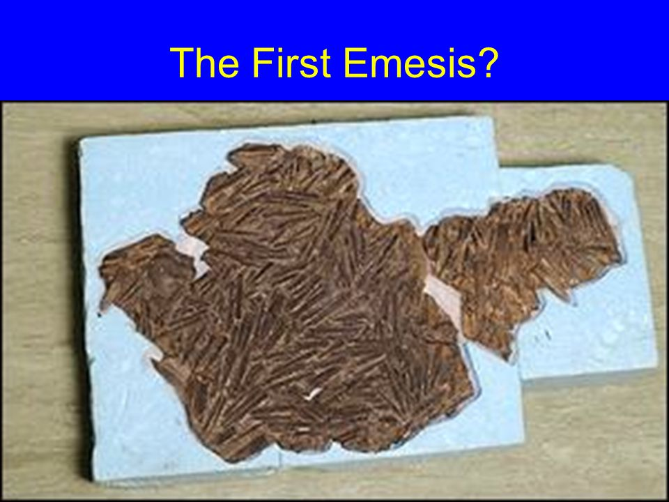 The First Emesis