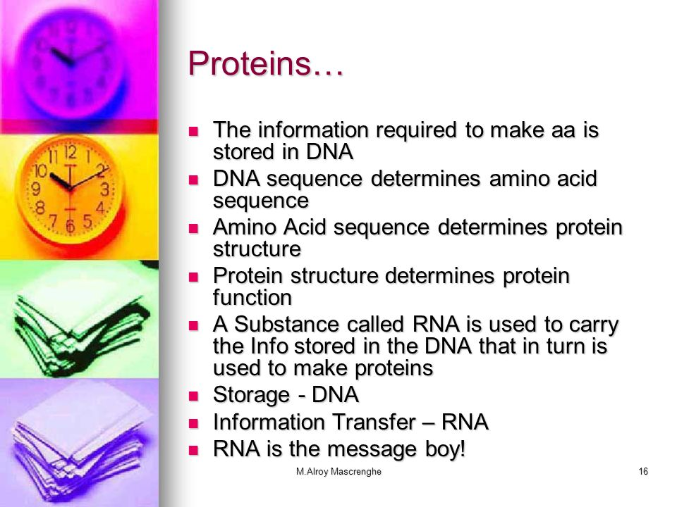 Proteins… The information required to make aa is stored in DNA