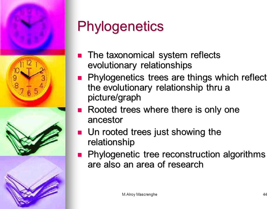 Phylogenetics The taxonomical system reflects evolutionary relationships.