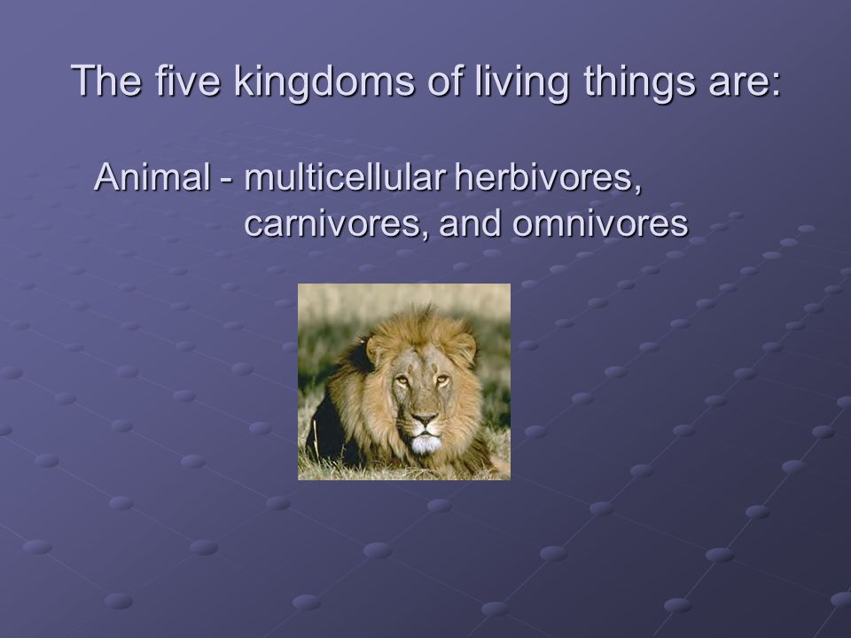 The five kingdoms of living things are: