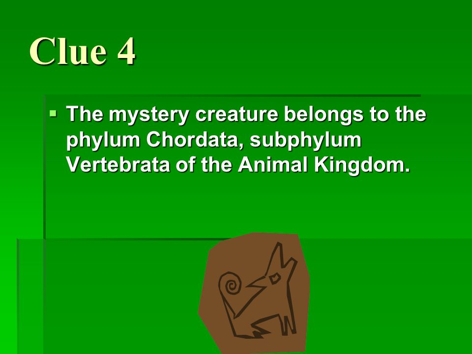 Clue 4 The mystery creature belongs to the phylum Chordata, subphylum Vertebrata of the Animal Kingdom.
