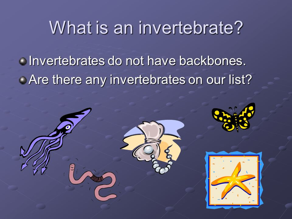 What is an invertebrate