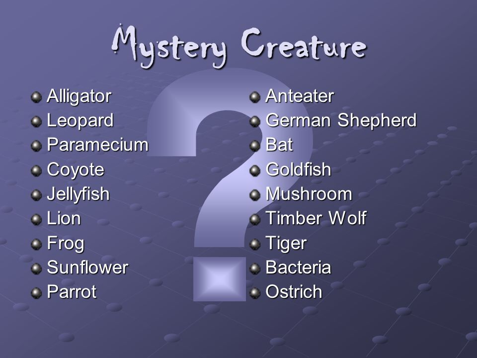 Mystery Creature Alligator Leopard Paramecium Coyote Jellyfish Lion